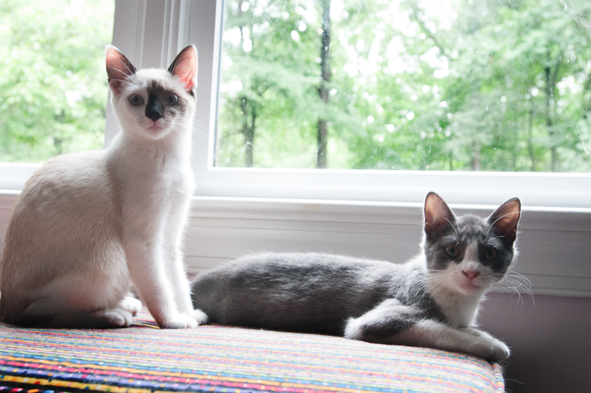 Furry Friends Pets-3.jpg