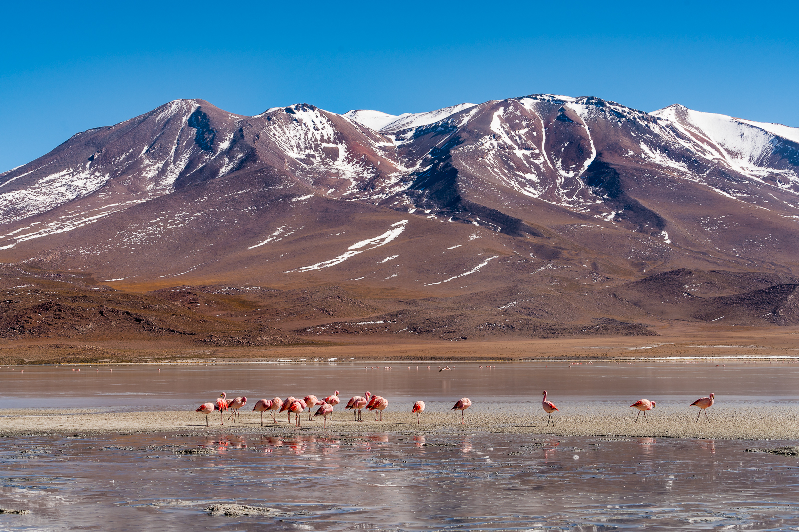Flamingos in beautiful surrondings
