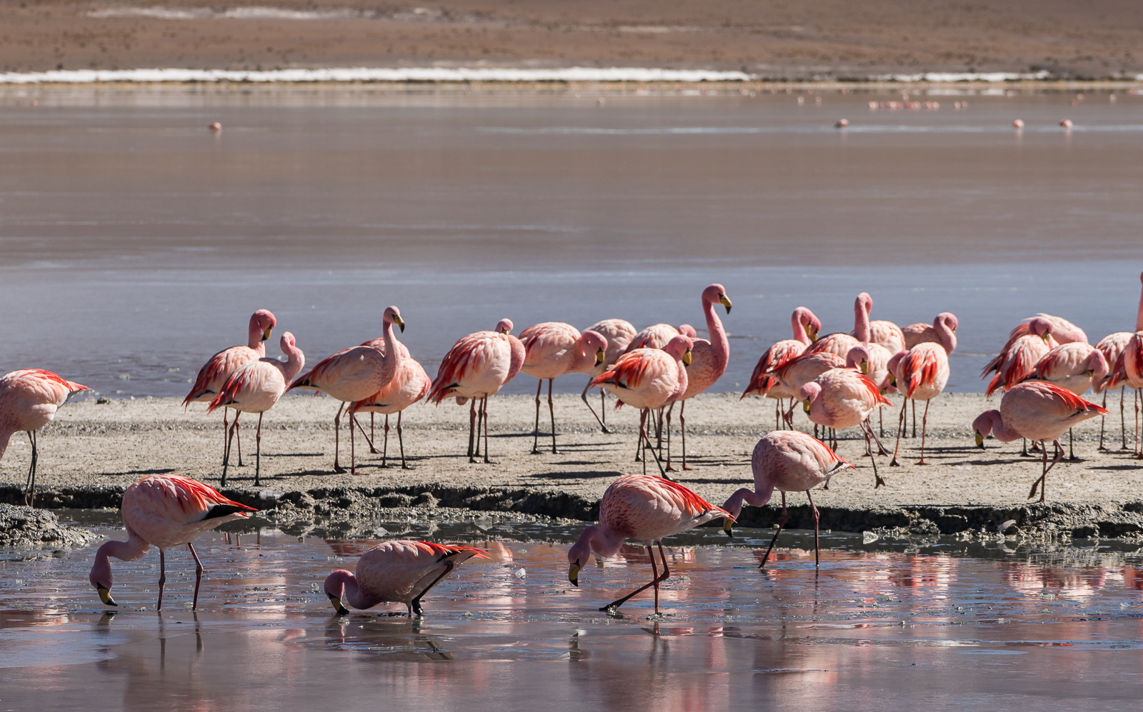 The flamingos don't seem to mind as long as you don't get too close