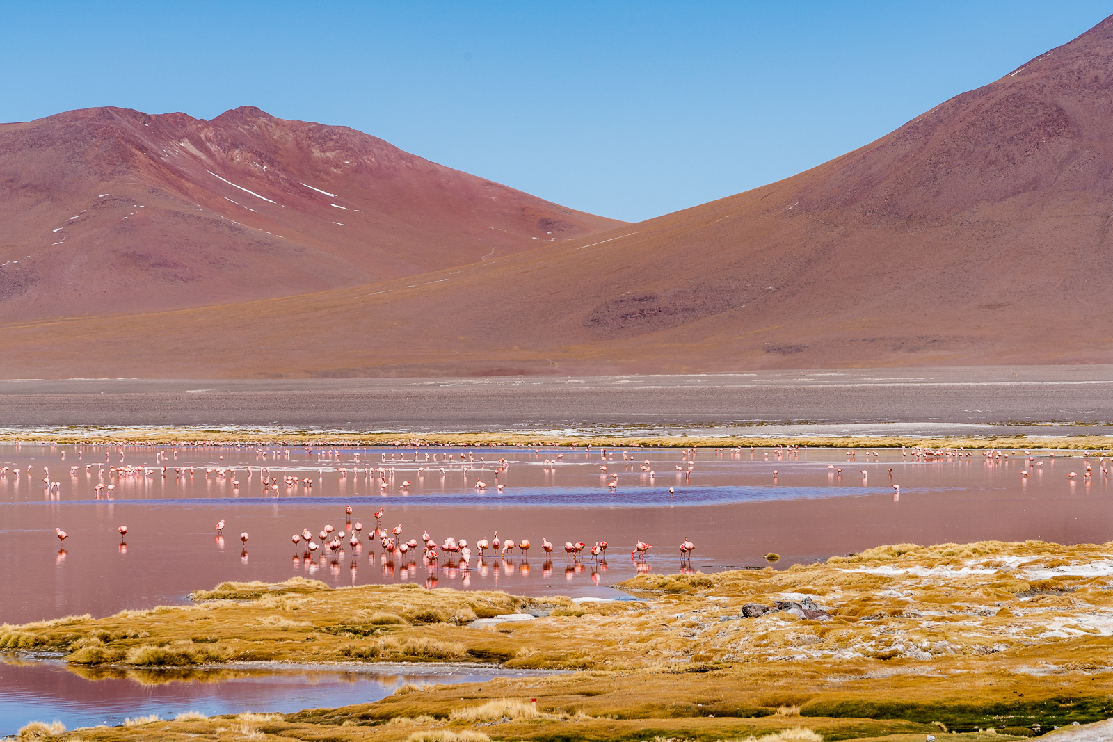 Laguna Colorada with its pink water and flamingos