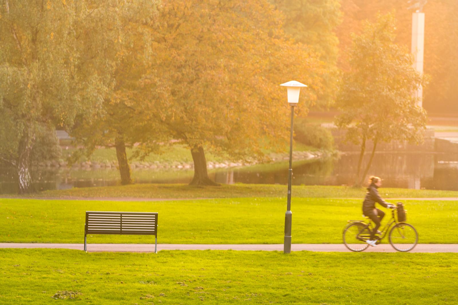 The park in sunset light