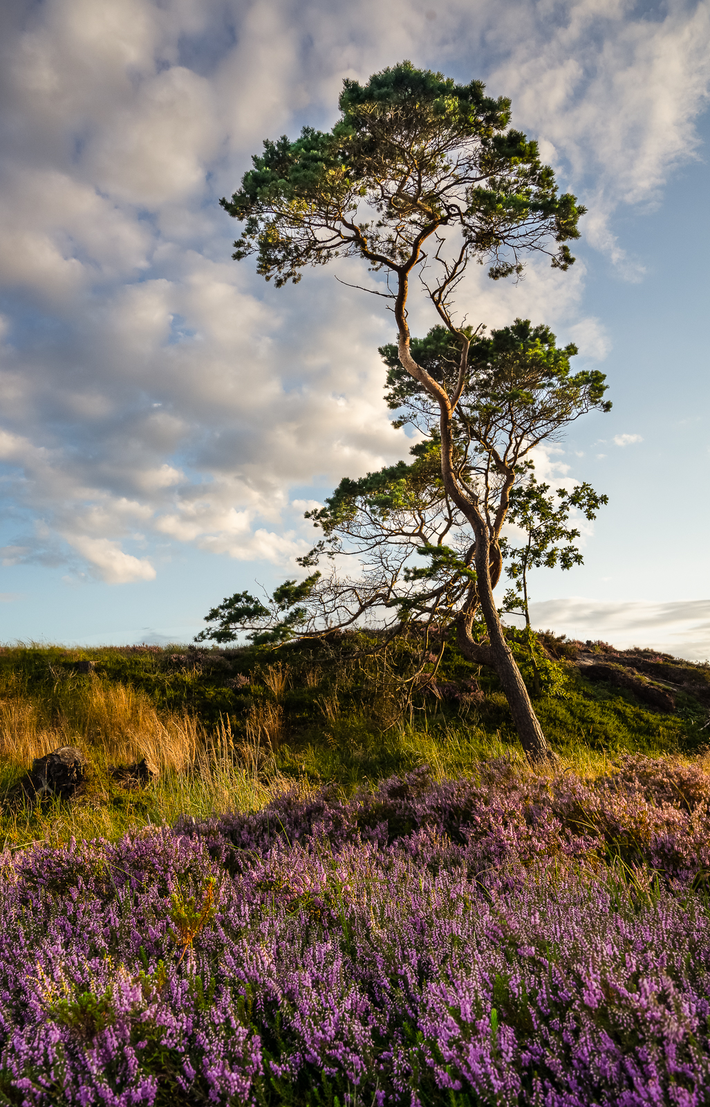Only heather and wind pined trees. Keep it simple.