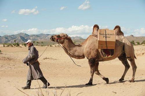 occ transport camel.jpg