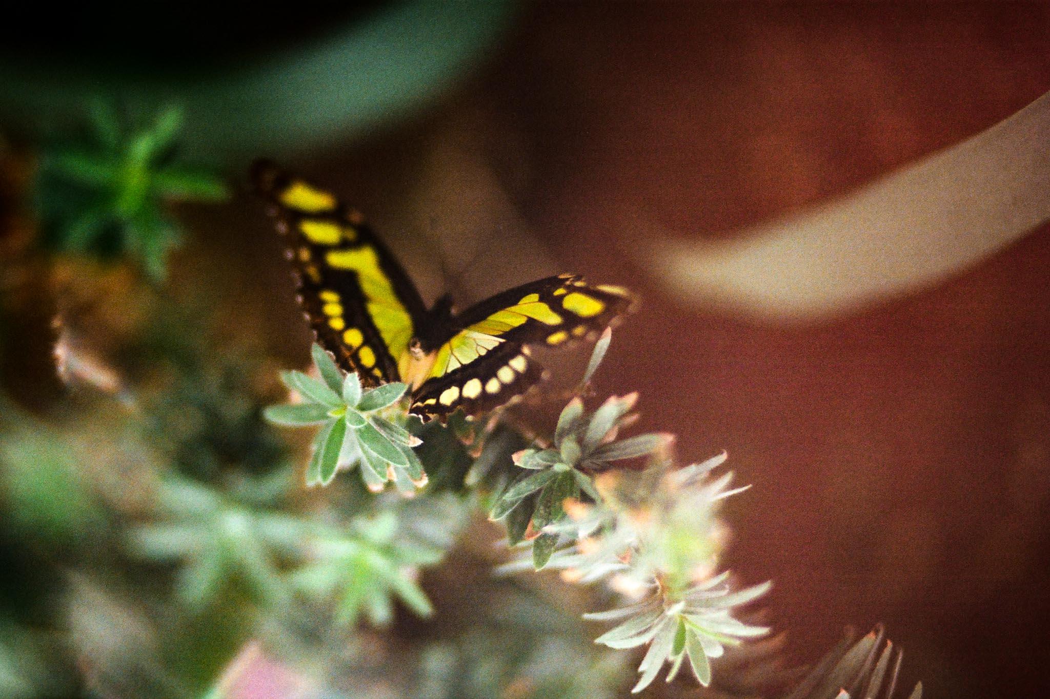 Butterfly Blog Files-6.jpg
