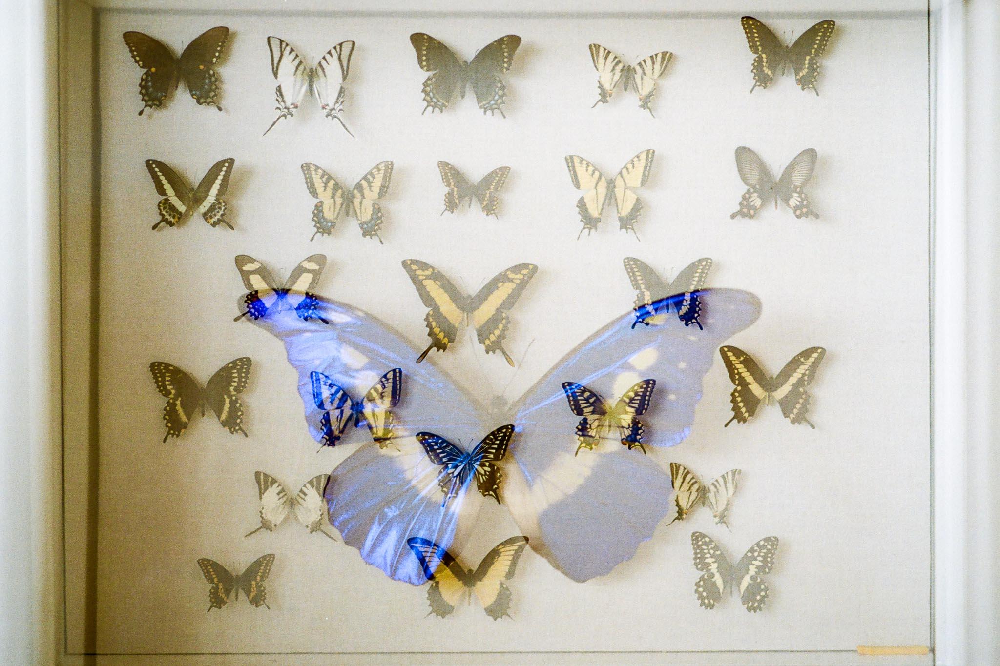 Butterfly Blog Files-4.jpg