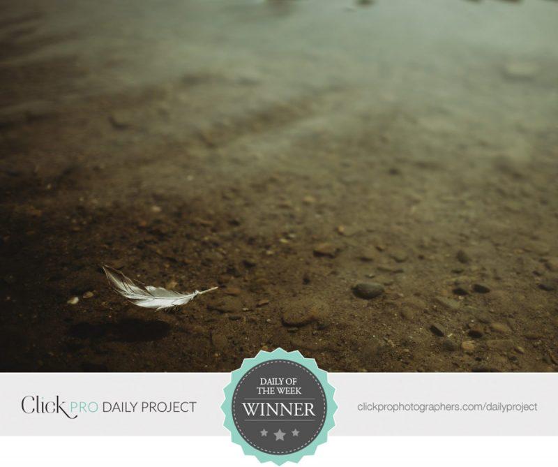 feather-in-water-cami-turpin-800x669.jpg