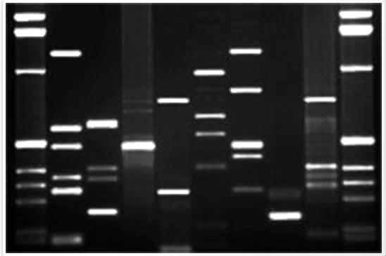 Image courtesy of DNA11