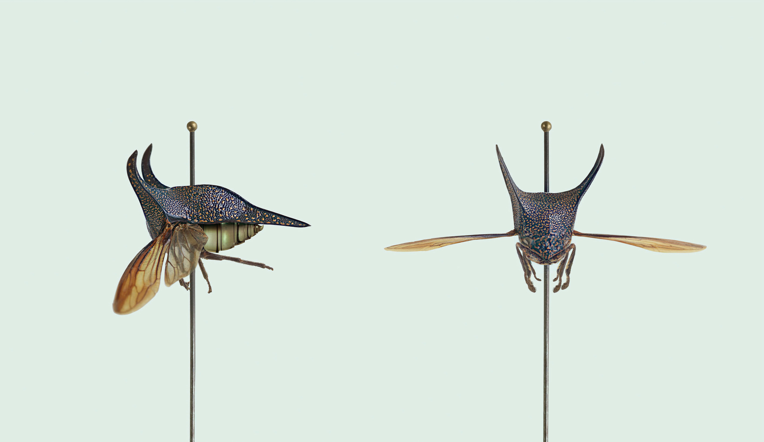 Image courtesy of the artist, Vincent Fournier. Post Natural History, 2013.
