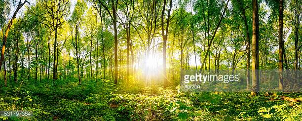 Photo by Xurzon/iStock / Getty Images