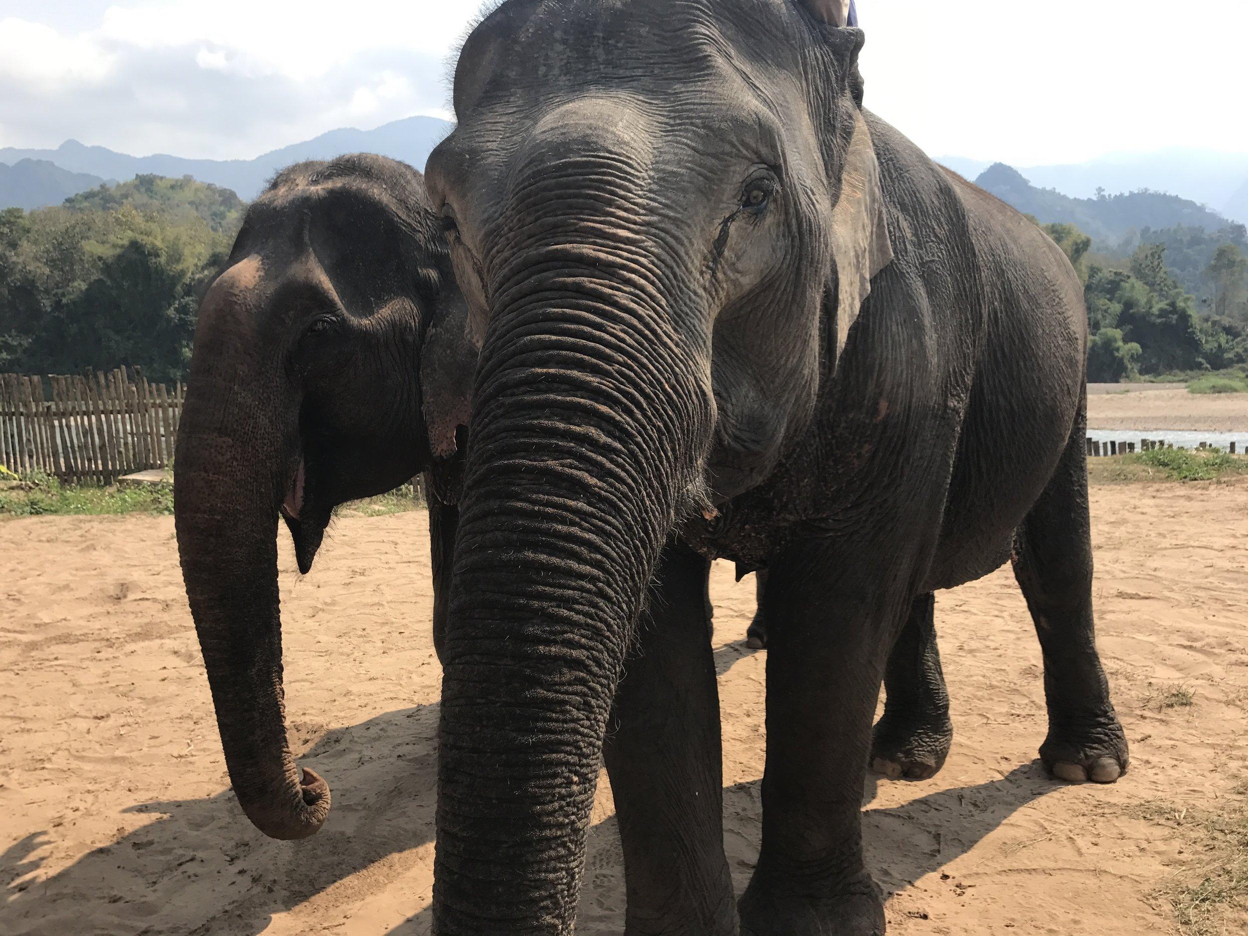 Our raison d'être at the Elephant Sanctuary
