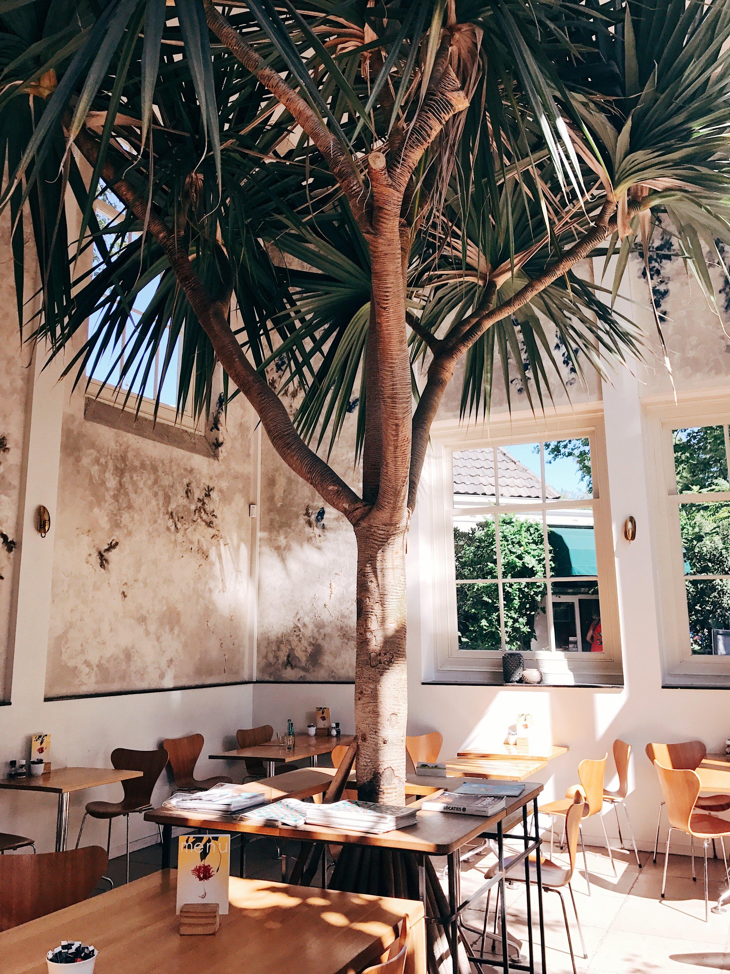 The cafe at Hortus Botanicus