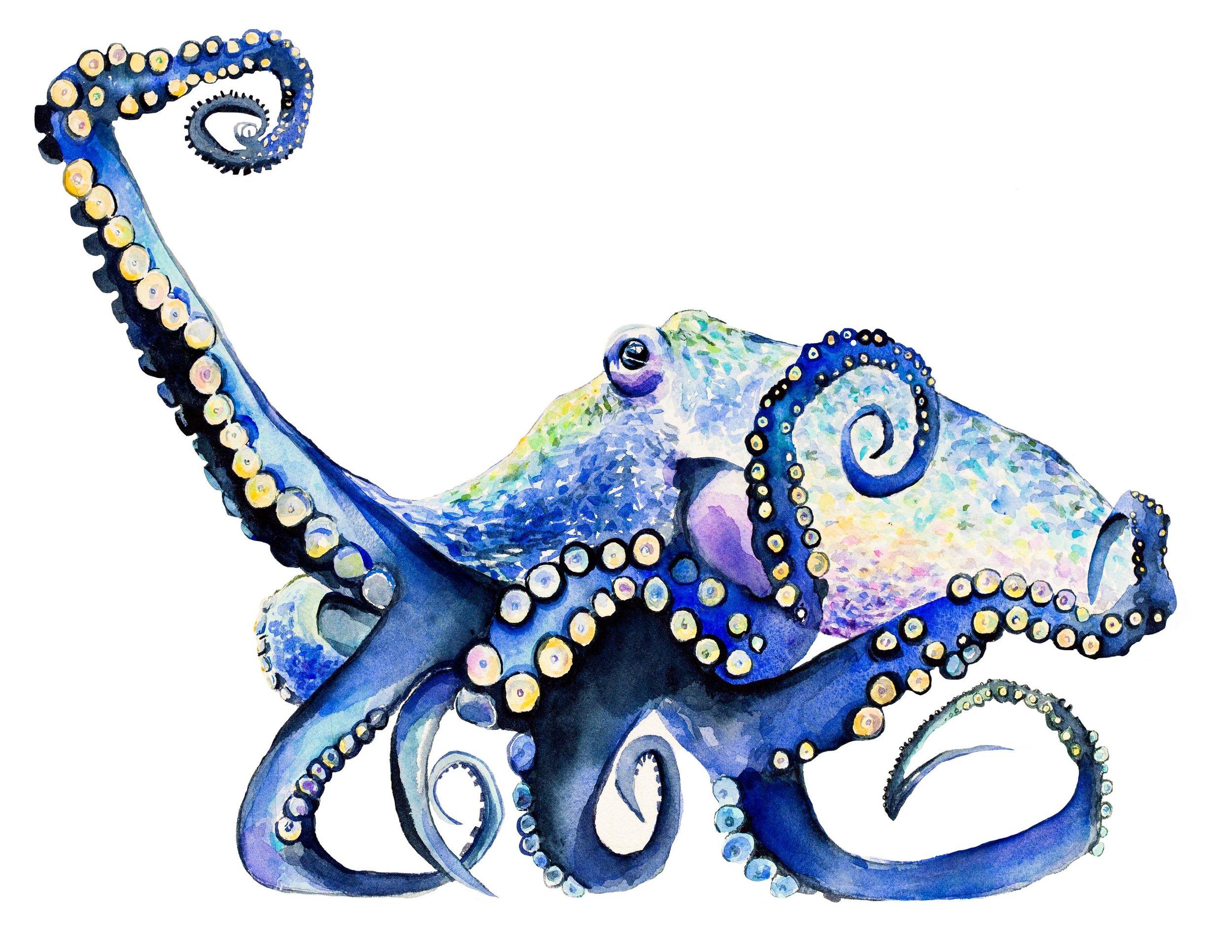 Octopus for Imaging.jpg