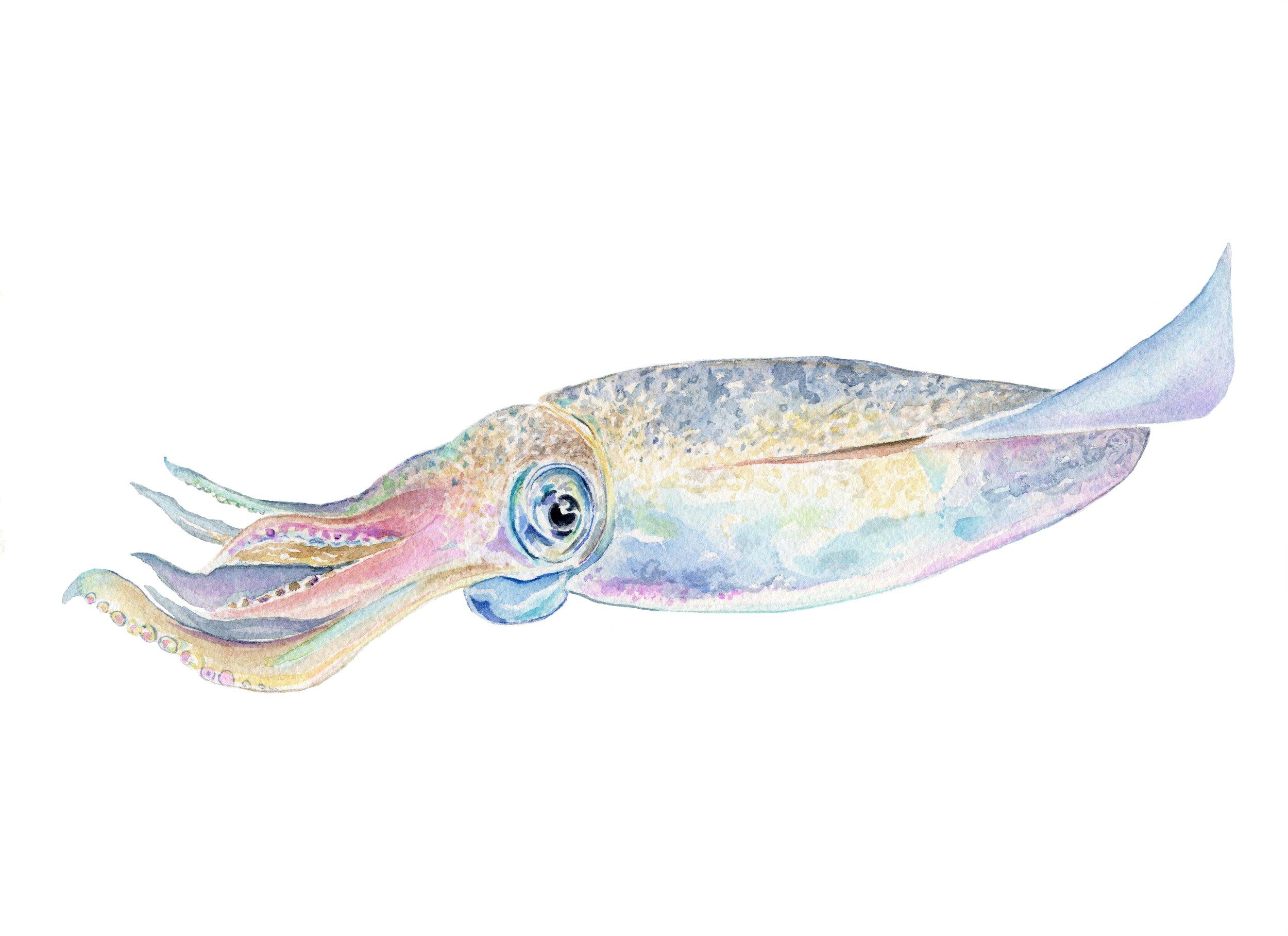 Squid for Imaging.jpg
