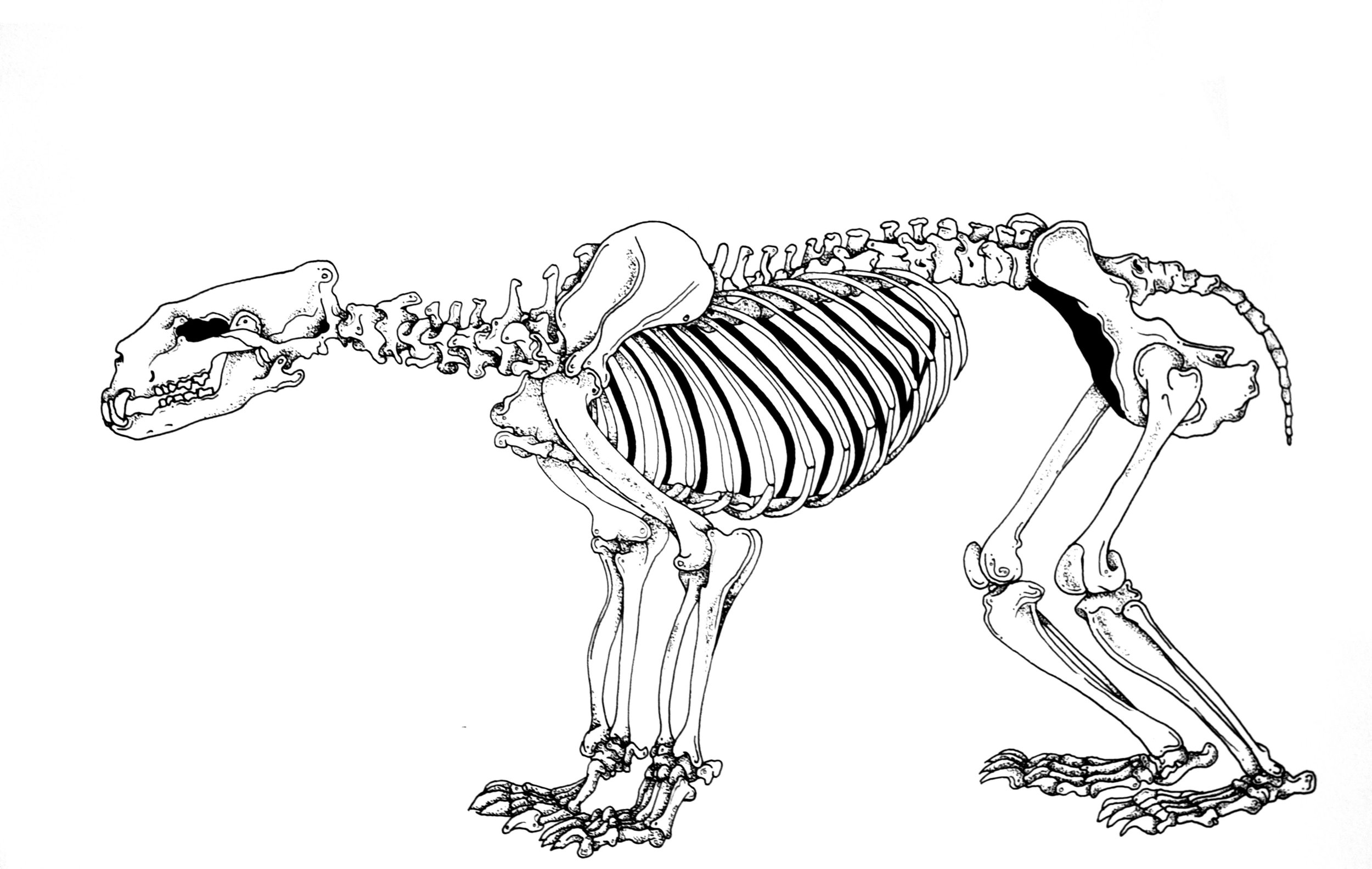 skull-8.jpg