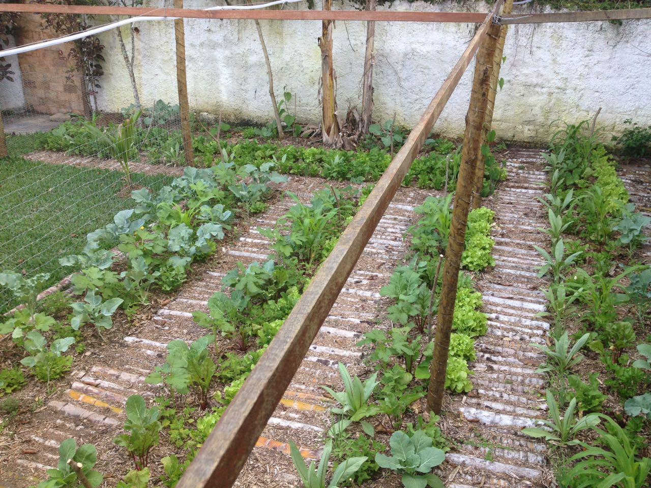 Estágio inicial de horta em quintal