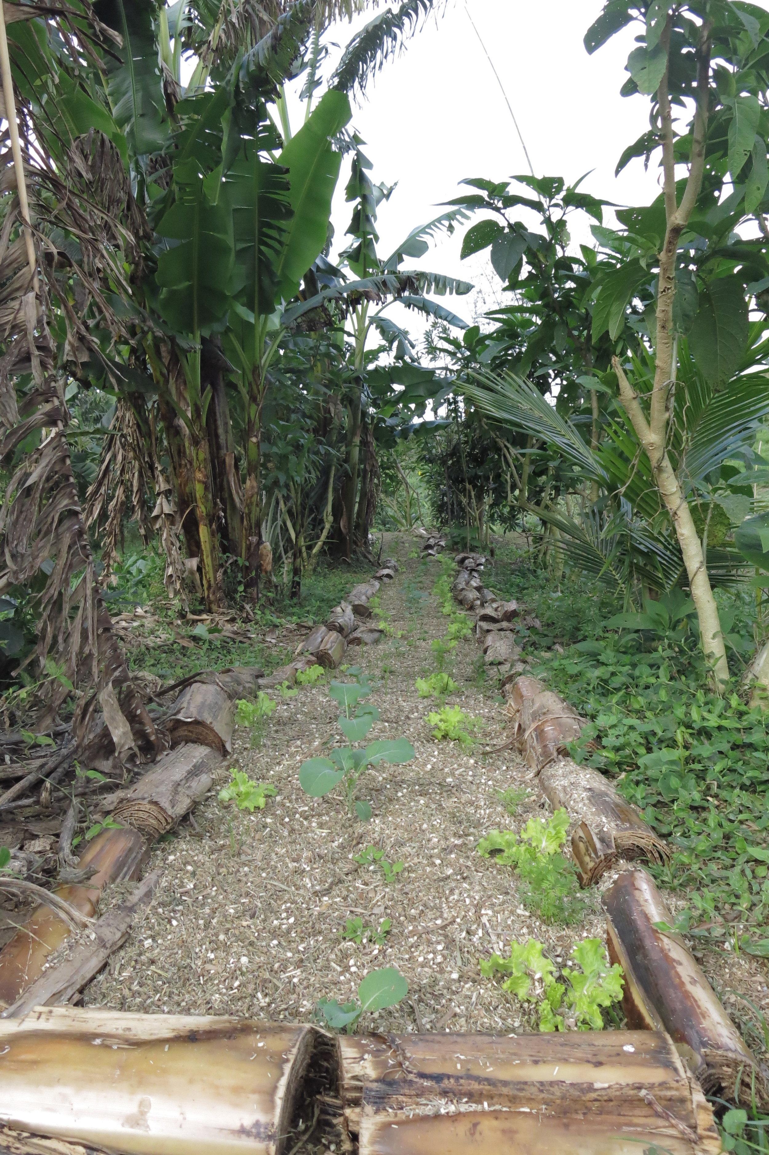 Leiras laterais de frutíferas e do centro de hortaliças na Fazenda Grupo do Jardim