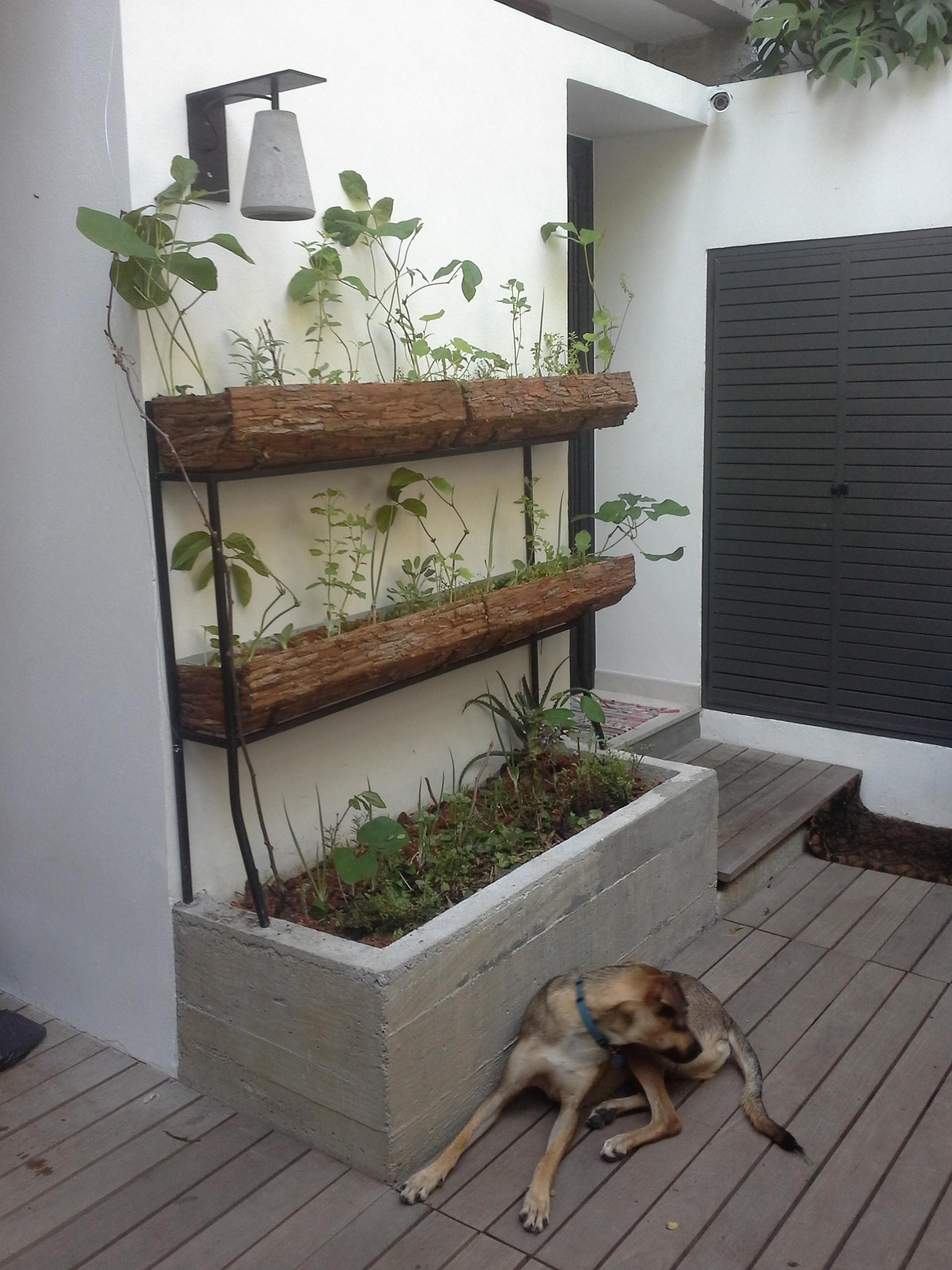 Horta na área interna de uma casa