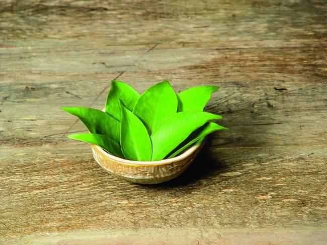 folhas-de-ora-pro-nc3b3bis-ou-rogai-por-nc3b3s-vegetal-rico-em-fc3b3sforo-e-cc3a1lcio-_40041308_preview.jpg