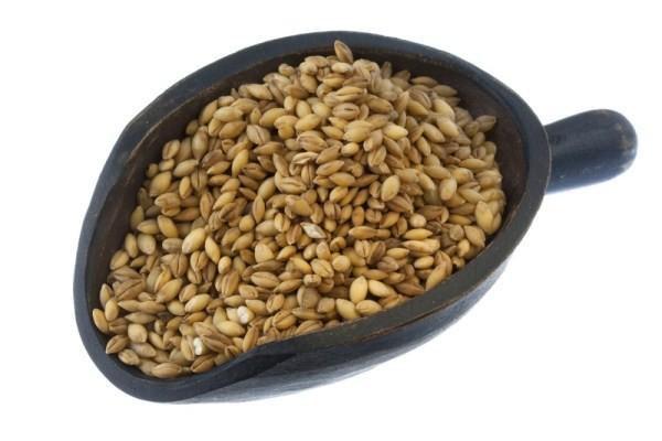 organic-barley-grain-(600-x-400).jpg