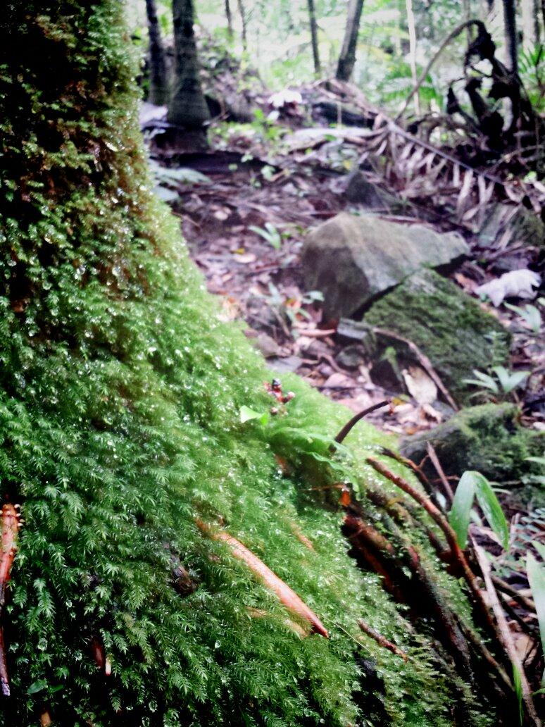 #find me - rainforest edition