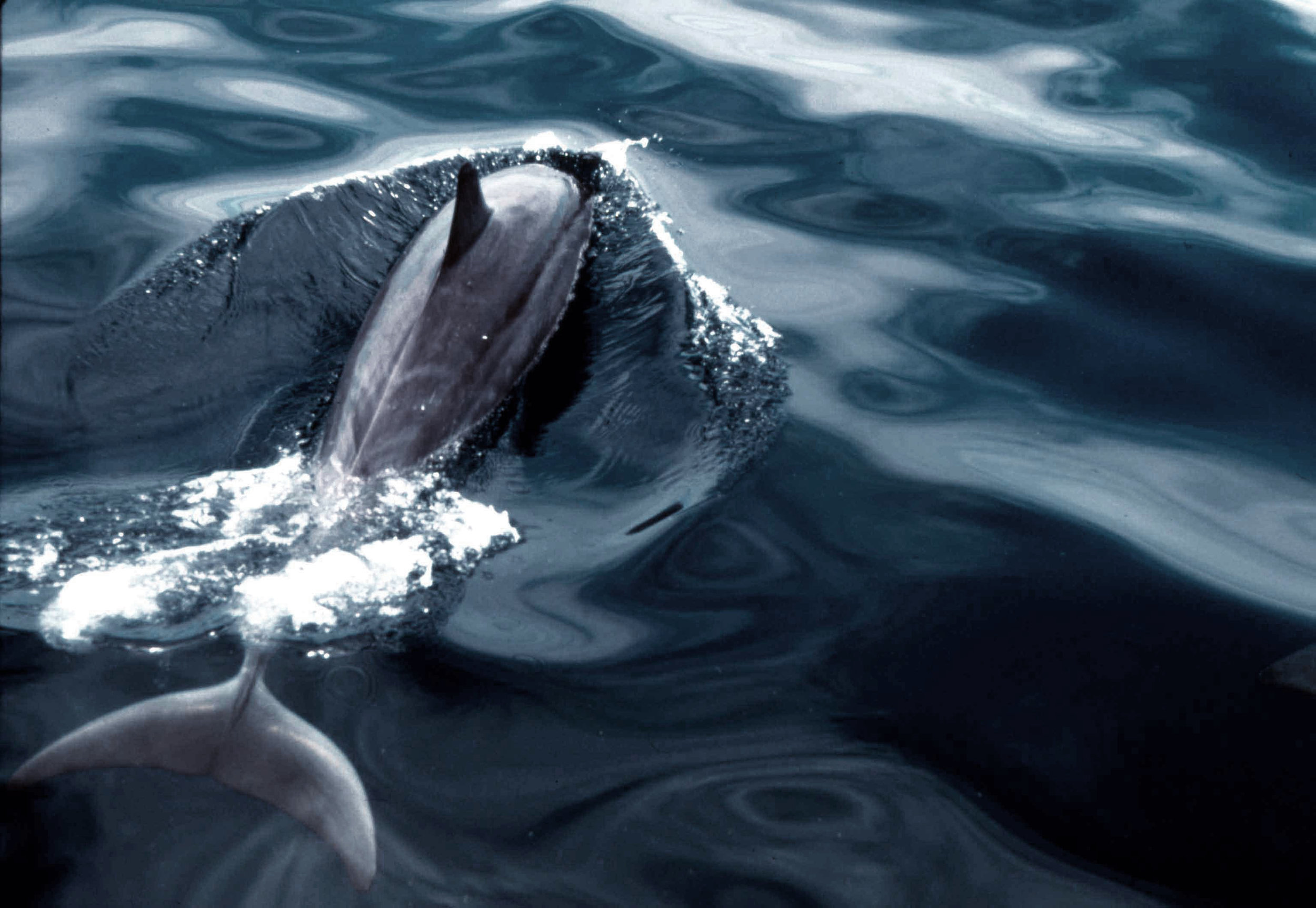 Kimball-Hall_Dolphin-3bhue.jpg