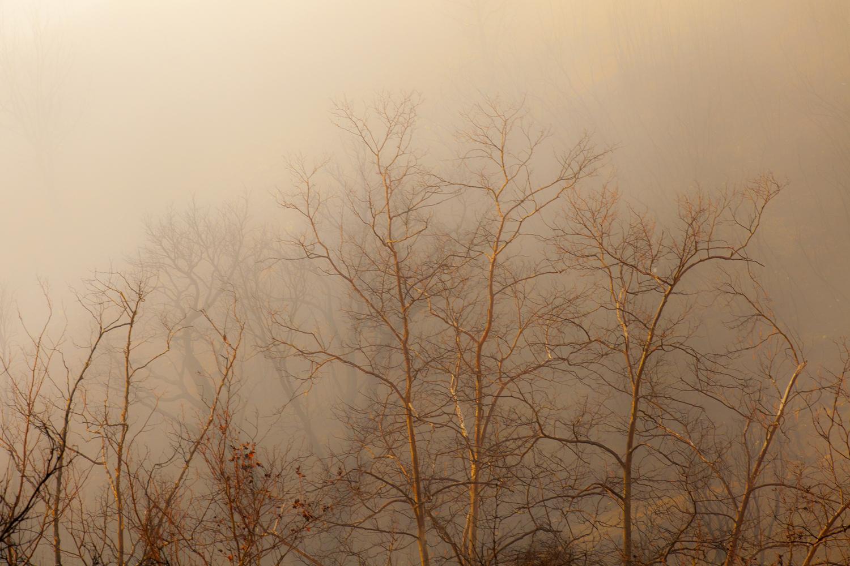 Kimball Hall treetops.jpg