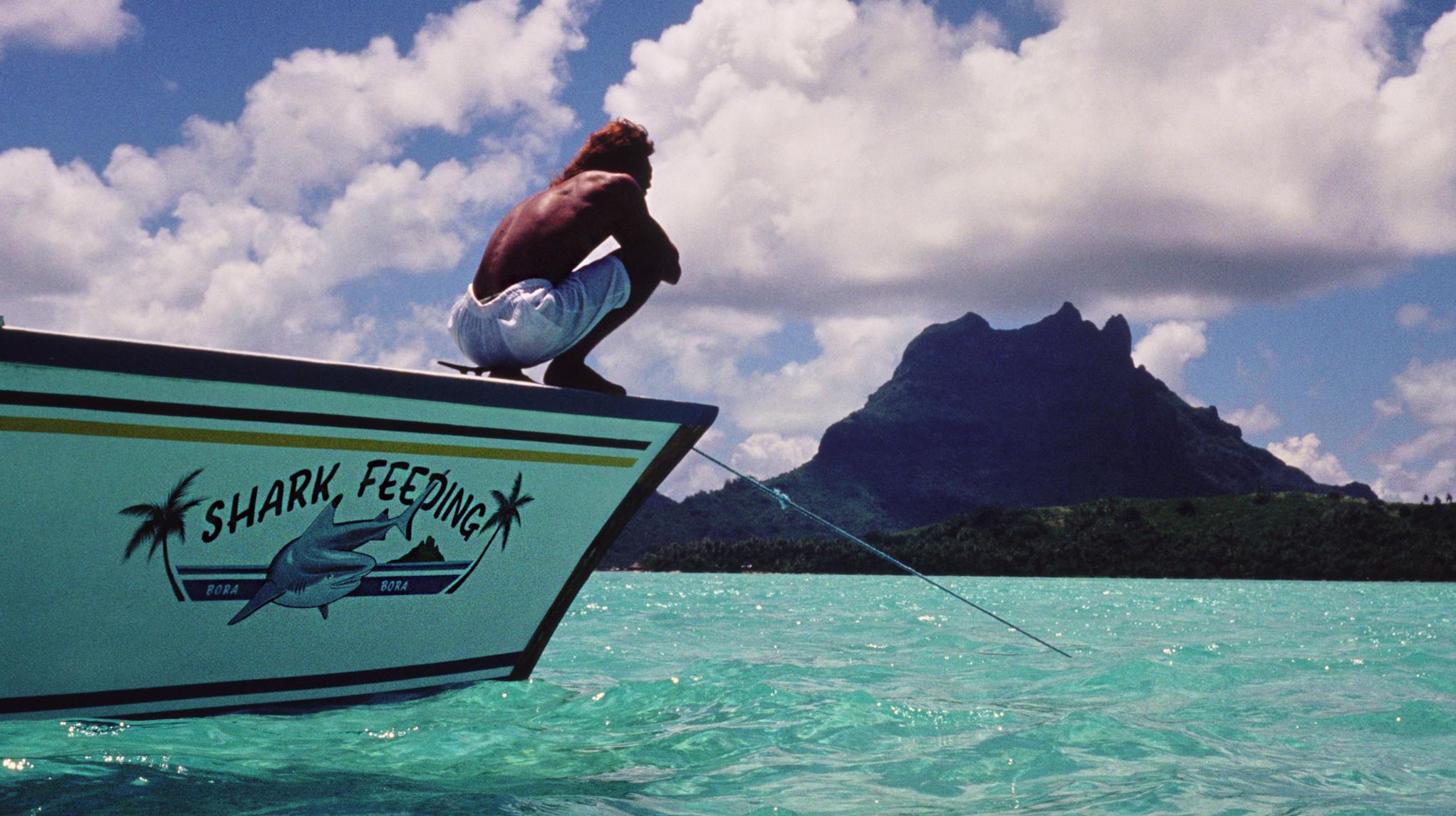 Kimball-Hall-sharkfeeding-Tahiti-cropped.jpg