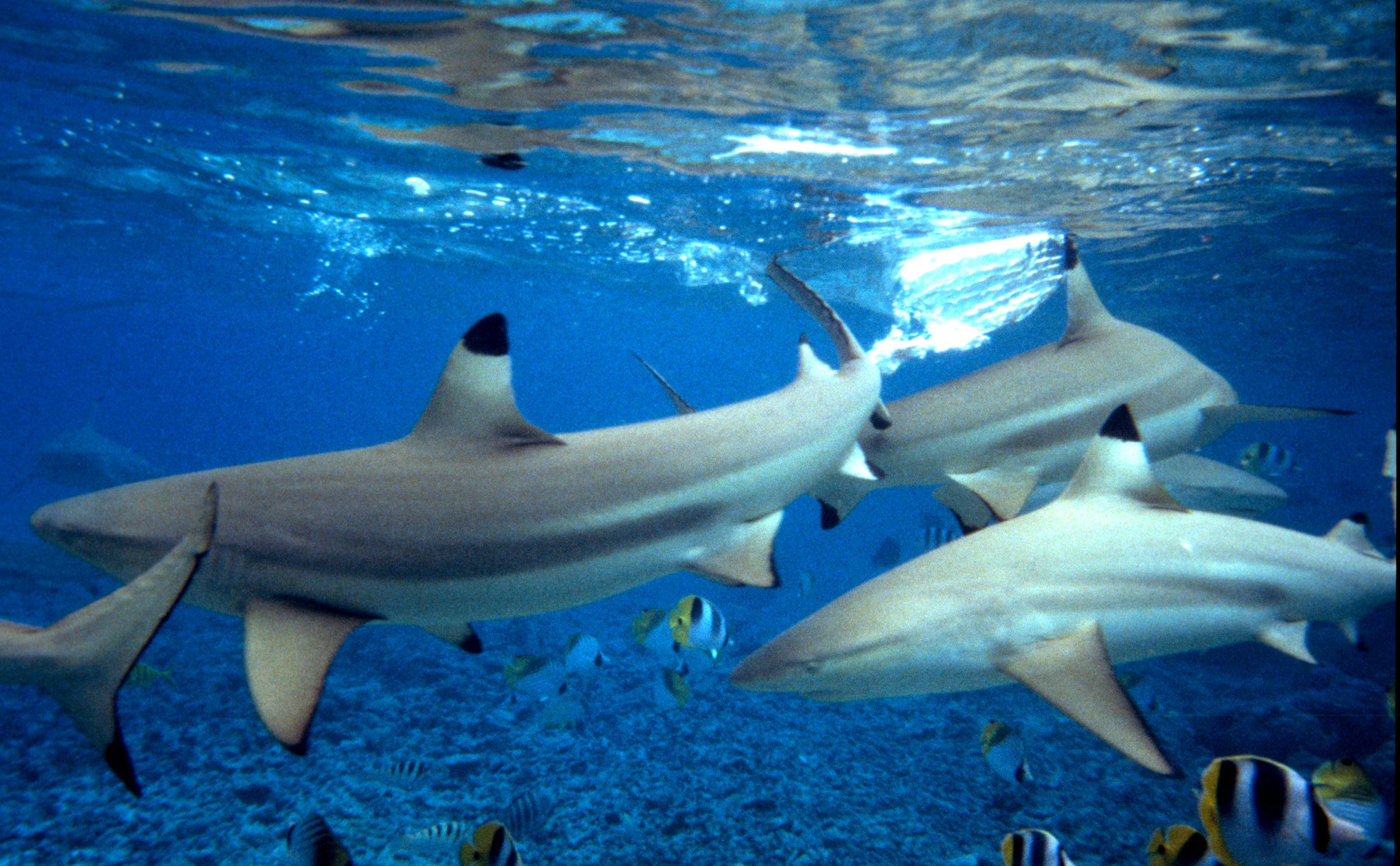 Kimball-Hall-Shark-2.jpg