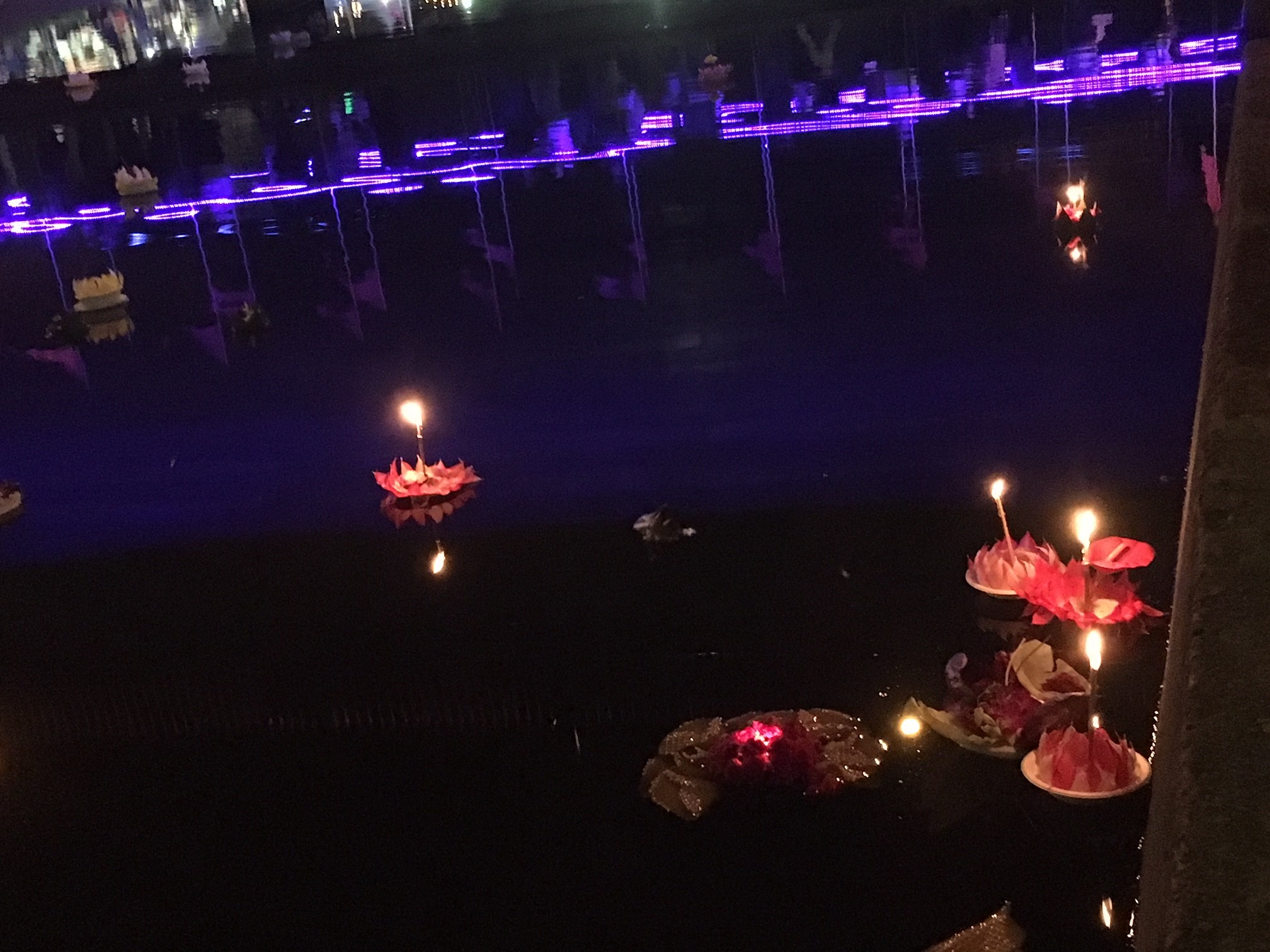 Kratong (floating lanterns) on the Parramatta river carrying people's prayers and best wishes.