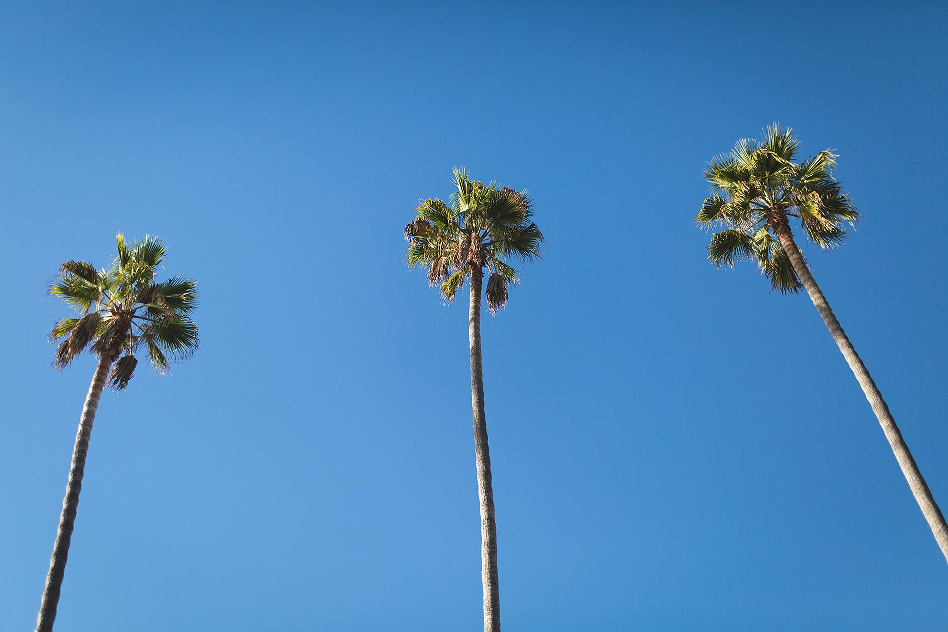 Christine Dammann Photography San Diego Vacation Photographer PalmsWS