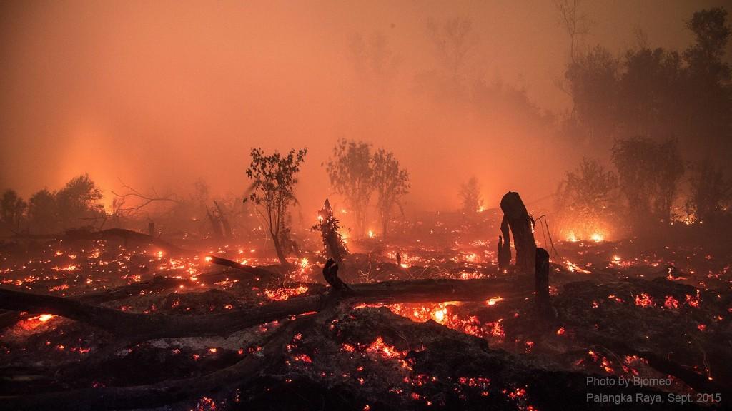 Peat fire 2015. Photo by Bjorn Vaughn