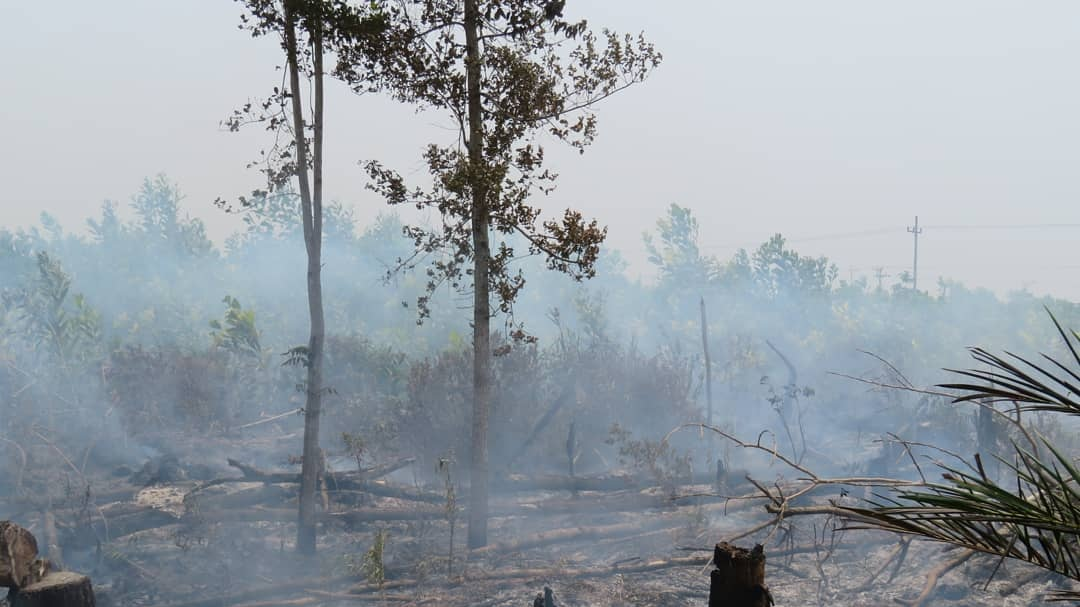 """""""HOW INDIGENOUS YOUTH ARE FIGHTING THE INDONESIAN FIRES"""" - September 3, 2019"""