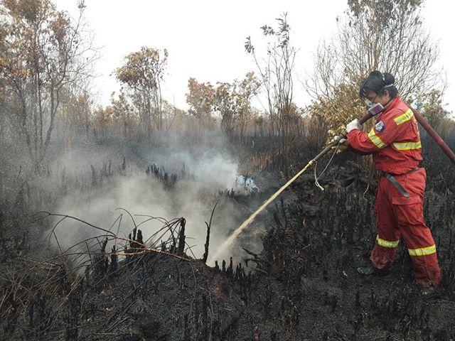 """Rabu, 2 Oktober 2019 . Tim kami melakukan patroli pasca """"Tanggap Darurat"""". Kami menemukan titik api di Petuk Katimpun, dan lingkar luar Palangka Raya. Api yang kami temukan hanyalah api bawah tanah dan api kecil, tapi api seperti ini tidak bisa di remehkan. Begitu melihat kepulan asap, kami langsung turun dan memadamkan api yg kecil itu. . Bersyukur, saat kami sedang makan siang, tiba-tiba hujan deras turun. Kami benar-benar gembira😁. Tapi kami tetap melaksanakan patroli di tengah hujan. Karena kami tahu api di lahan gambut belum tentu padam. Sampai keadaan benar-benar aman, kami berani untuk kembali dari tugas. . Wednesday, October 2, 2019 . Our team conducts patrols to find active hotspots post """"Emergency Response"""" status got taken off. We found hotspots in Petuk Katimpun, and the outer ring of Palangka Raya. We found active fires burning under the peatland ground fire and it's 'small scale' fire, but this kind of fire cannot be underestimated. When we saw a puff of smoke, we immediately went down to the spot and put out the small fire. . Fortunately, when we were having lunch, it suddenly rained heavily. We were really happy😁. But we still carry out patrols in the rain. Because we know that fires in peatlands can't simply got extinguished. Until conditions were completely safe, we returned home from duty. . #youthact #act2give #katuyungfirefighters"""
