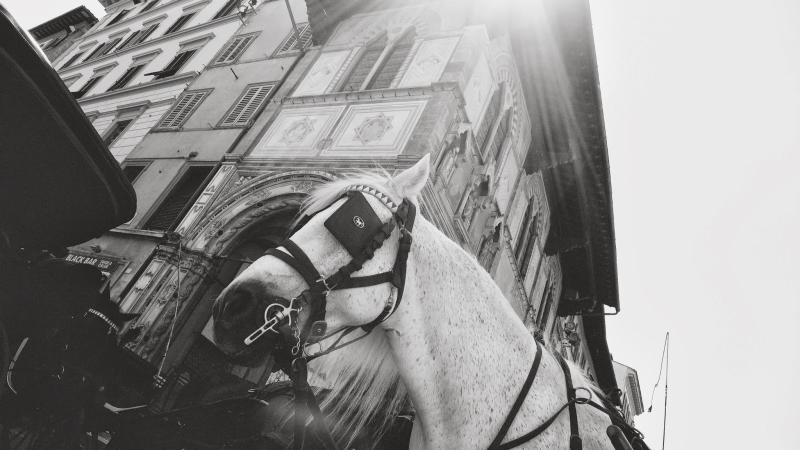 hermes_horse (1)