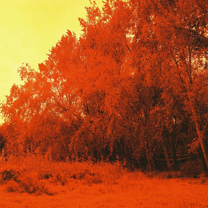 Garden Route_Medium Format_01.jpg