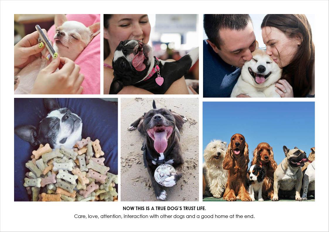 DogsTrust3.jpg
