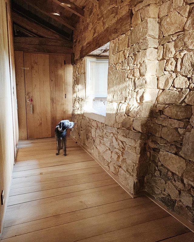 French farmhouse mornings 🍂 🥐#alotravels #france #bedlingtonwhippet