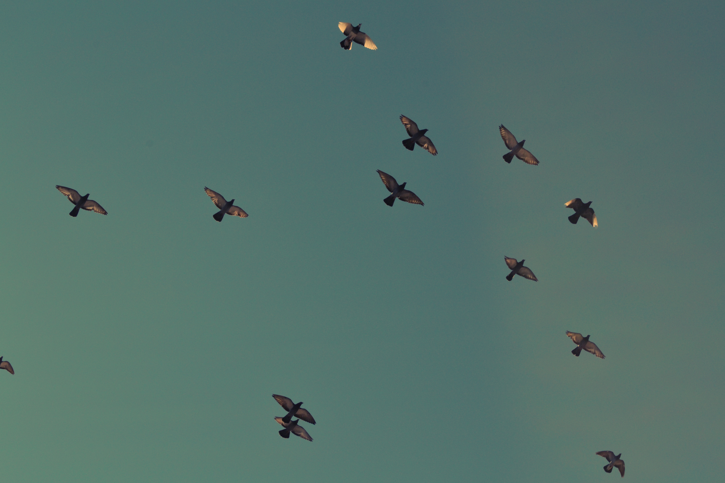 US5hzQnuTLSP9A2nSj4I_Birds.jpg