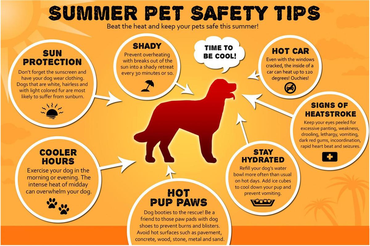 Summper Pet Safety Tips 1200.jpg