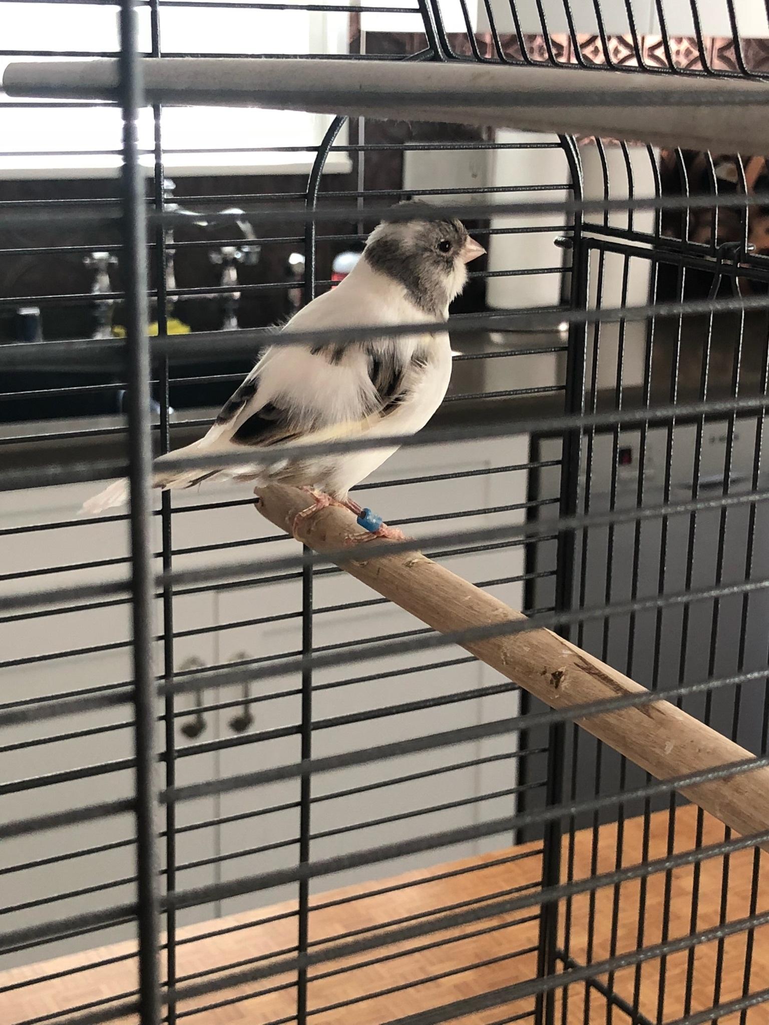 Bird found on Beverly Glen and Sunset.jpeg