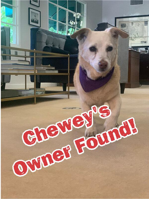 Cheweys owner found.jpg