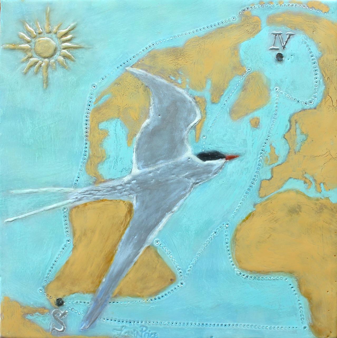 Arctic Tern 3