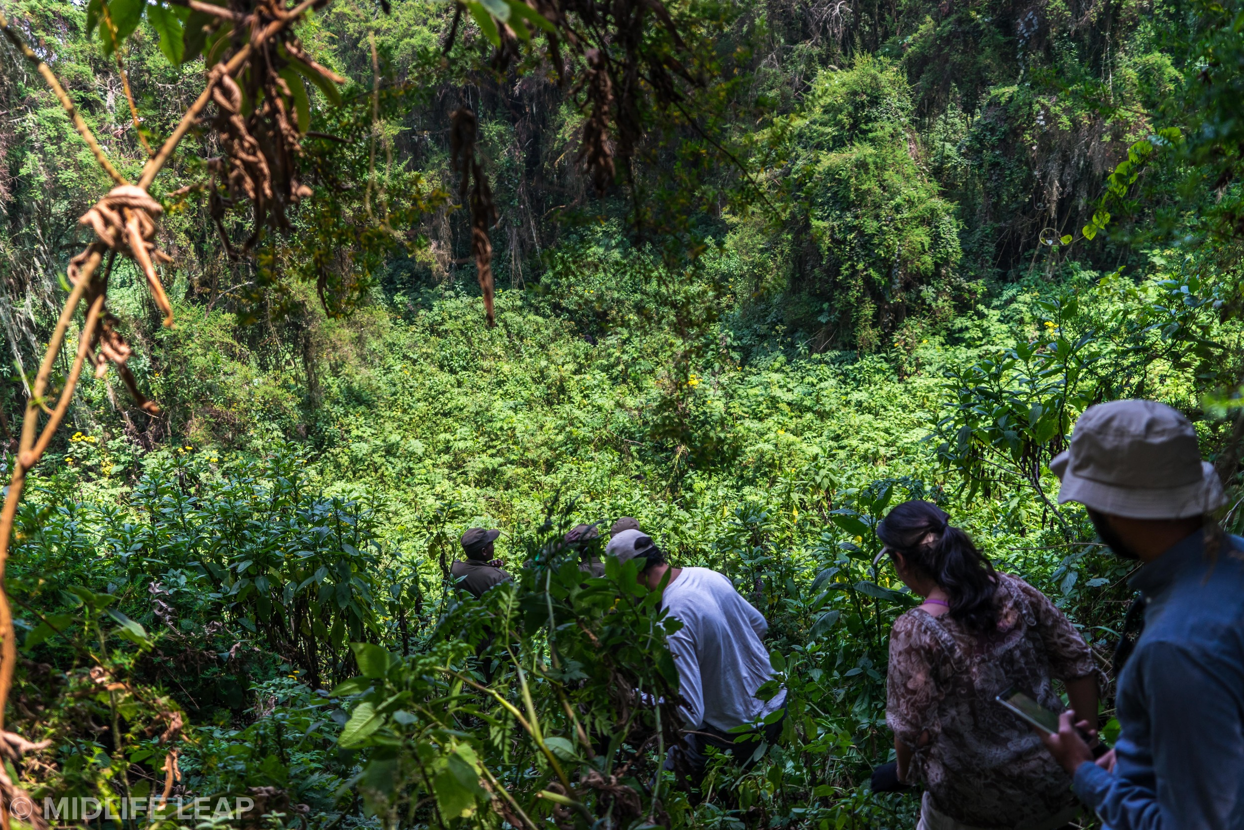 gorilla-trekking-in-rwanda