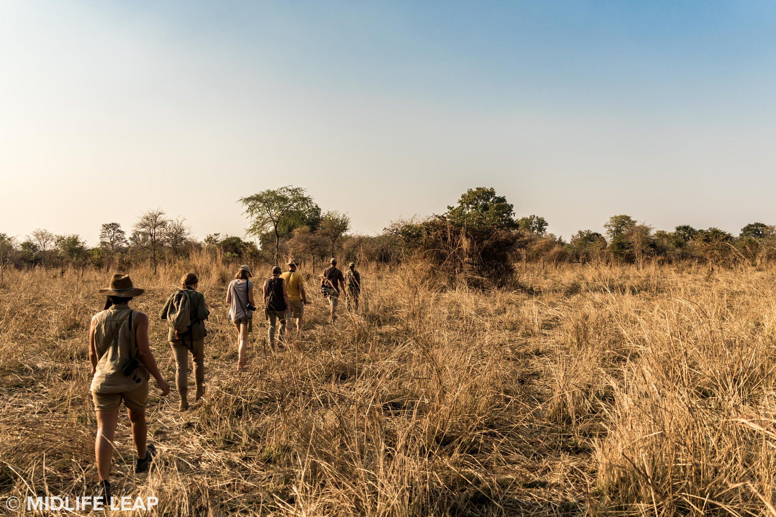 mwaleshi-north-luangwa-walking-safari-the-group.jpg