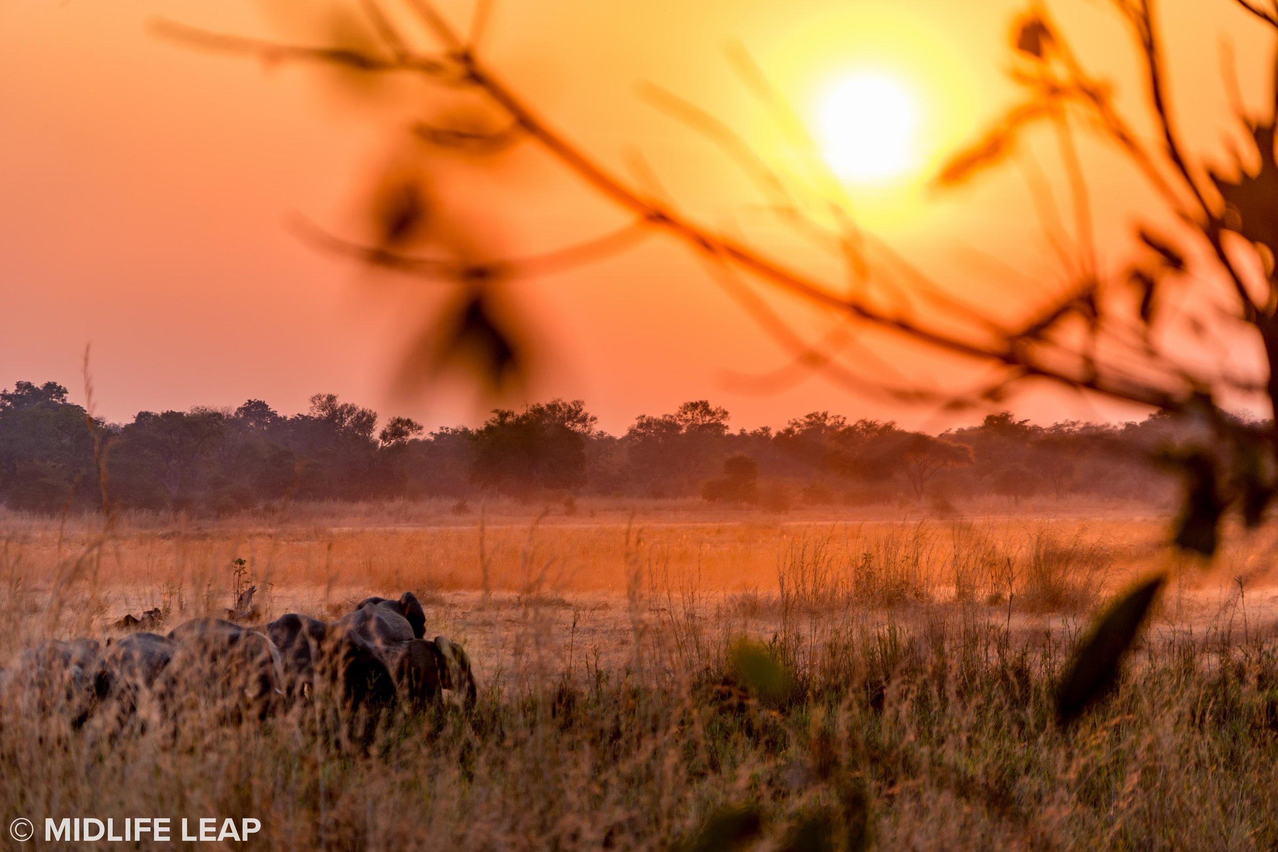 mwaleshi-north-luangwa-walking-safari-elephants-blurry.jpg