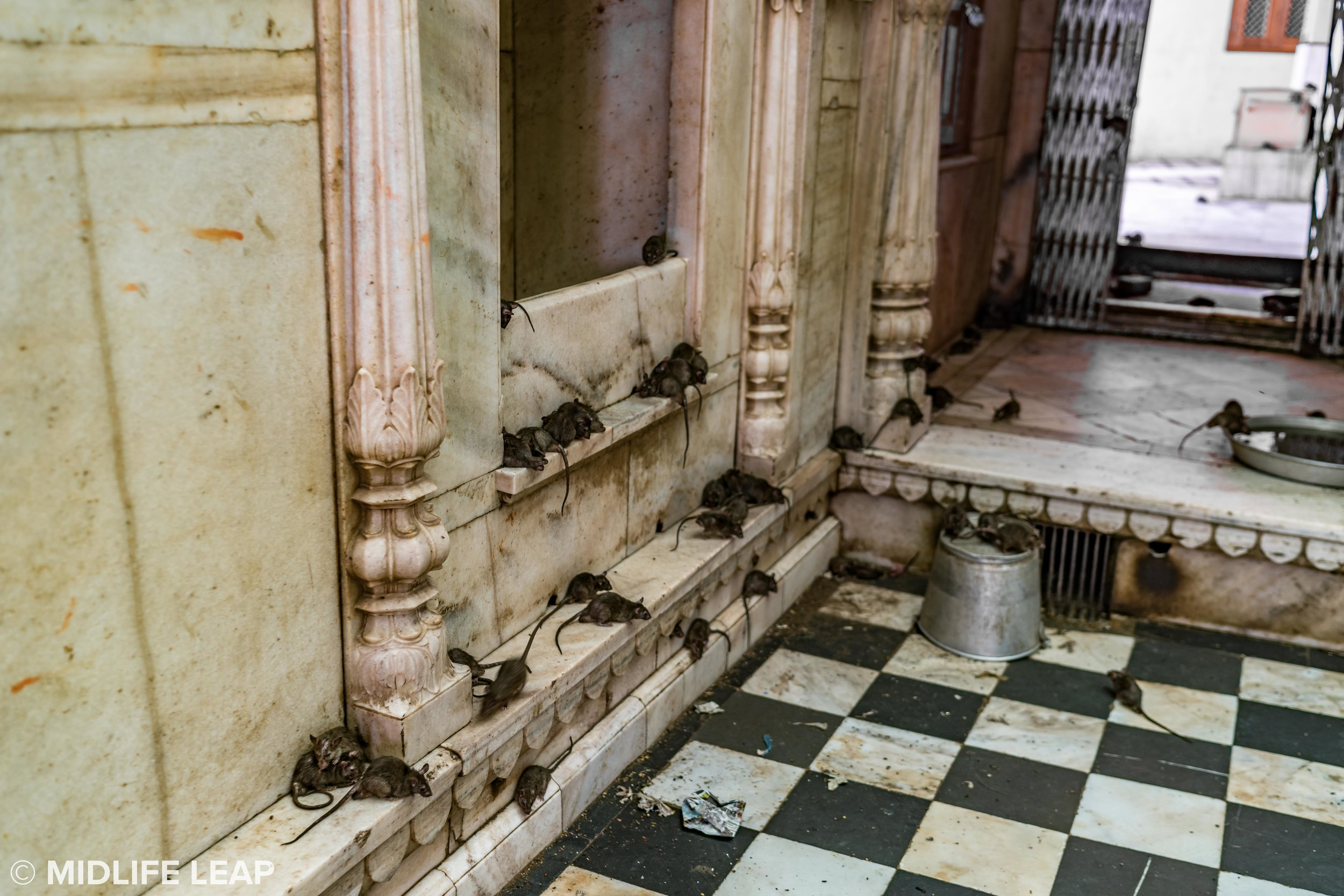 What nightmares are made of (inside Karni Mata Temple)