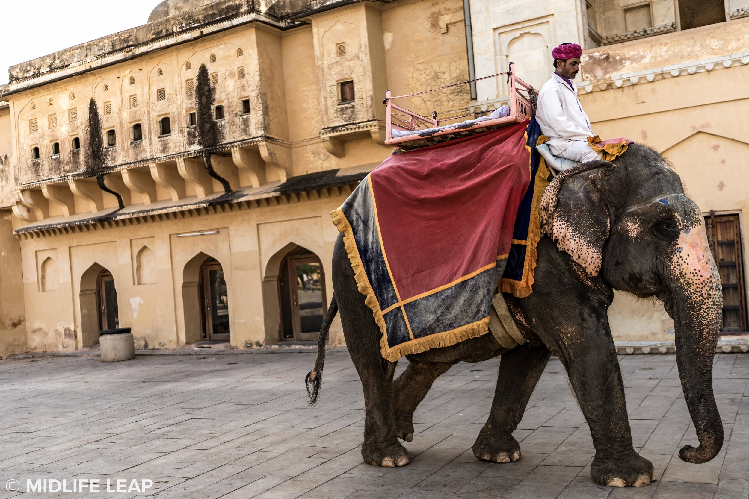 elephants-at-amber-fort-jaipur-rajasthan.jpg