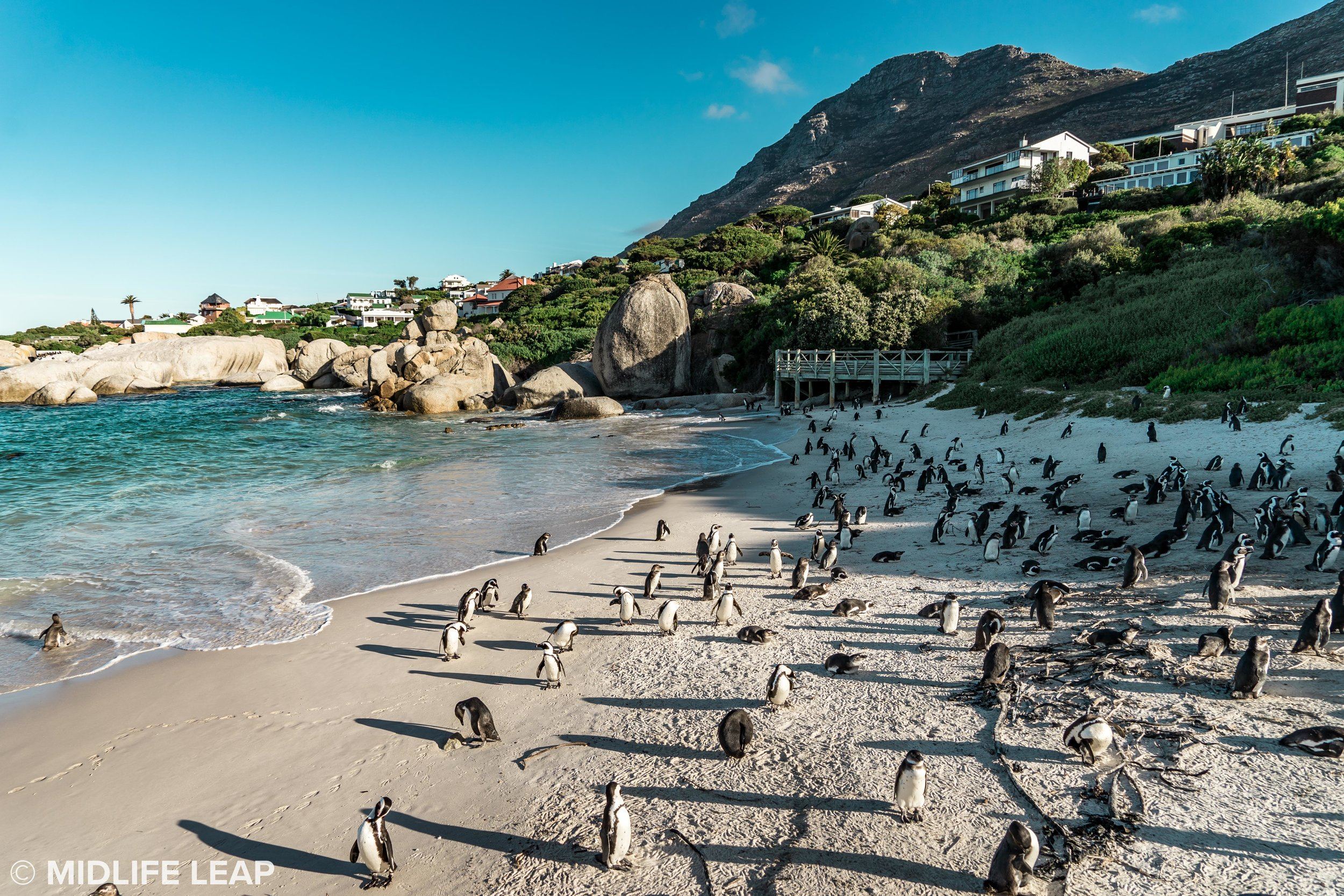 boulder-beach-simons-town-penguins