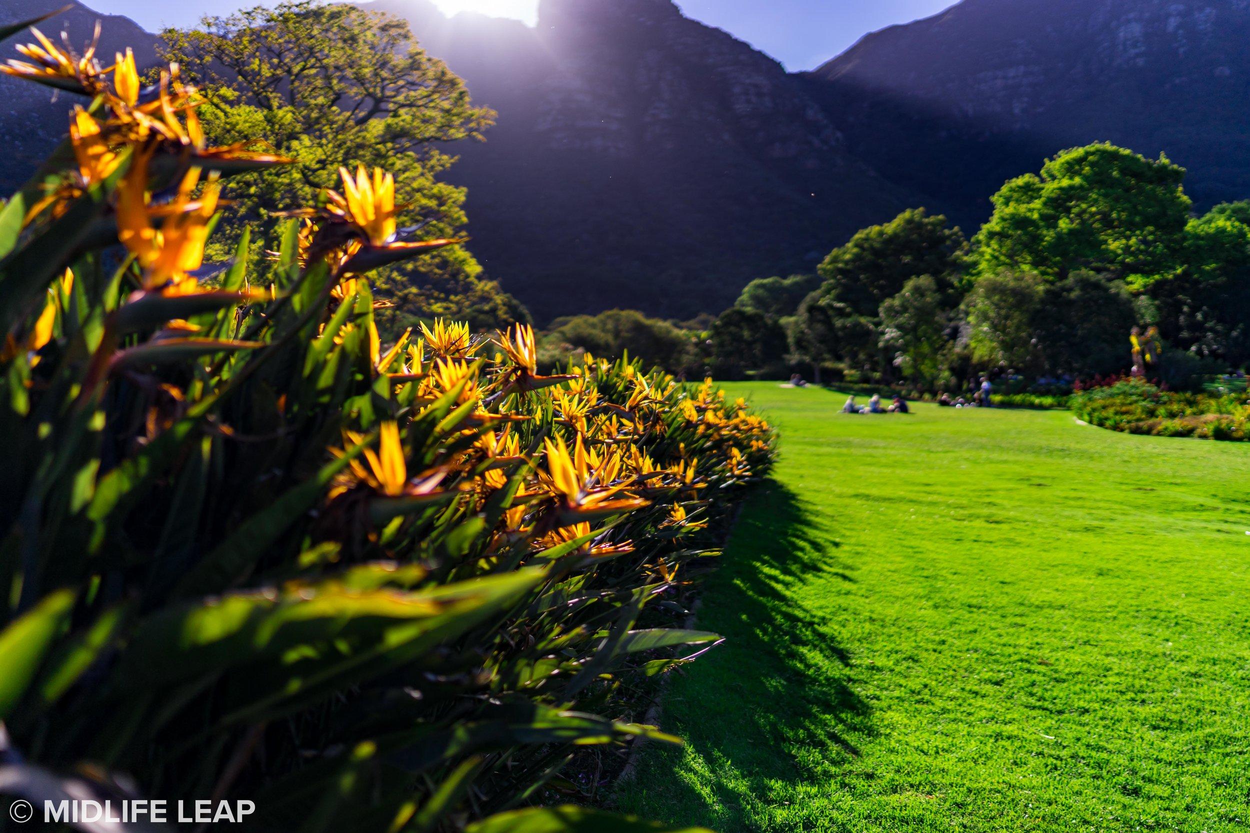 kirstenbosch-botanical-gardens-cape-town-south-africa