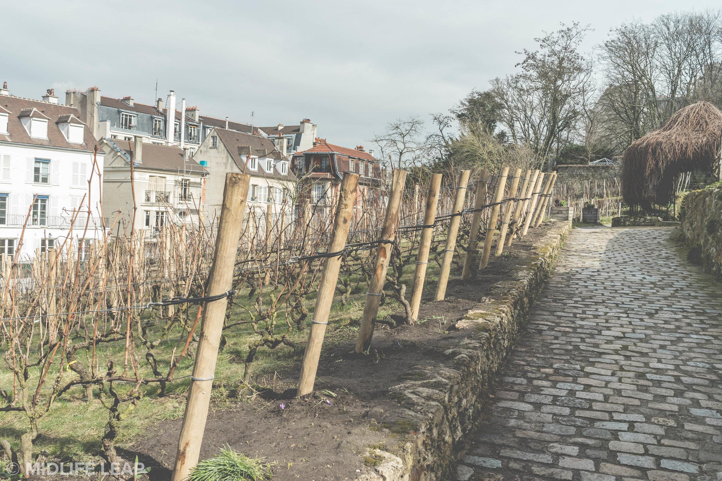le-clos-montmartre-hidden-vineyards-in-paris